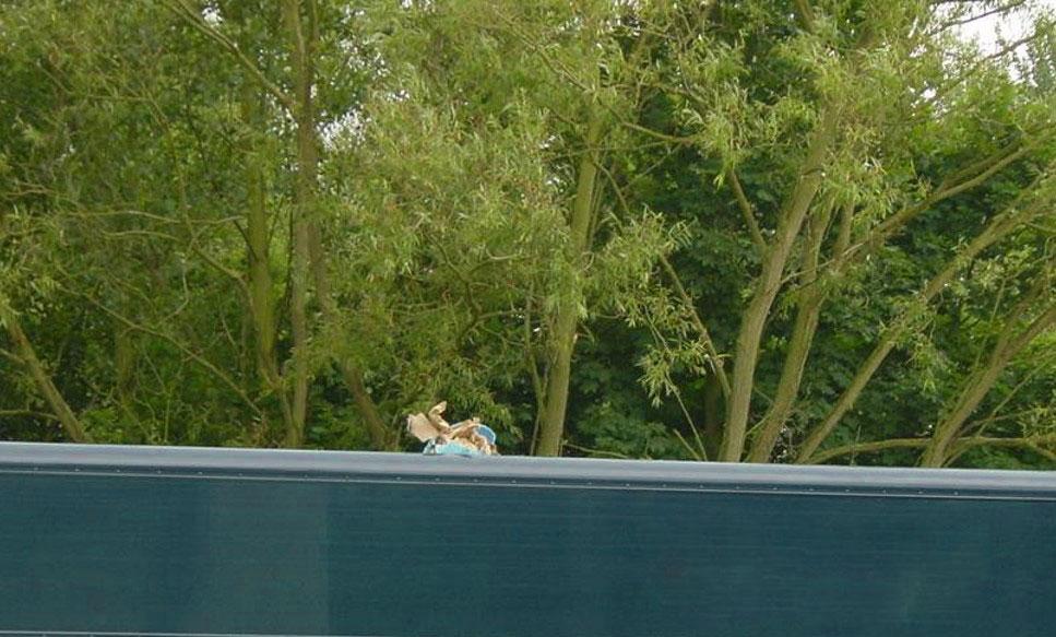 lifting deck roof giraffe